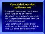 caract ristiques des papillomavirus