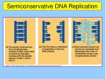 semiconservative dna replication19
