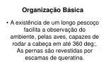 organiza o b sica