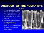 anatomy of the human eye12