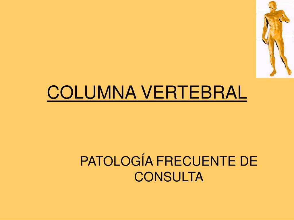 columna vertebral l.