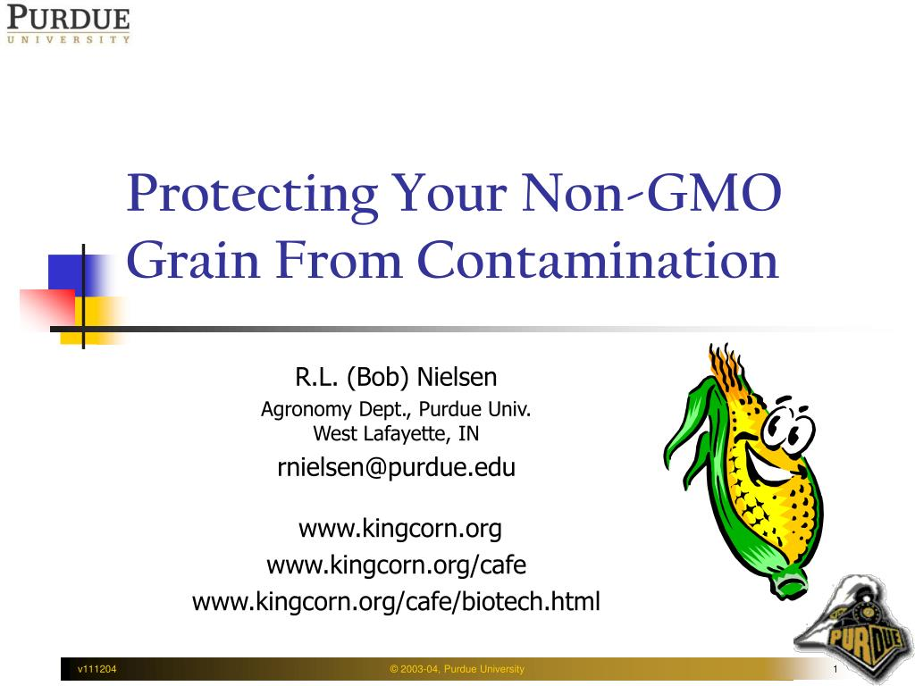 protecting your non gmo grain from contamination l.