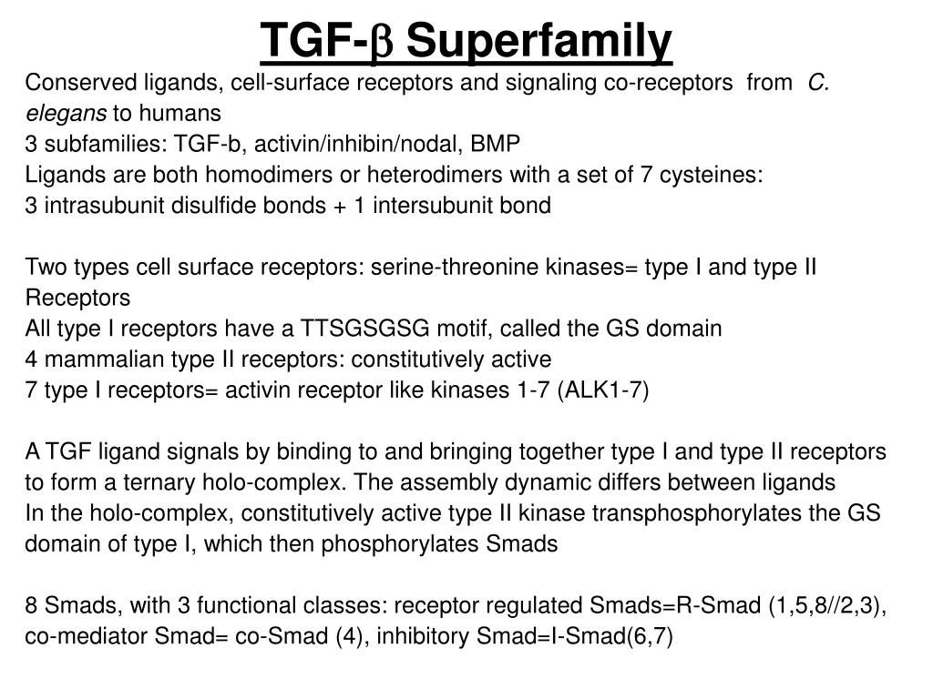 tgf b superfamily l.