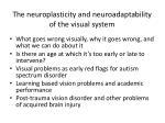 the neuroplasticity and neuroadaptability of the visual system