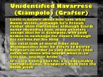 unidentified navarrese ciampolo grafter