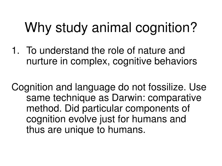 why study animal cognition n.