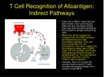 t cell recognition of alloantigen indirect pathways