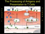 the processing of antigens and presentation to t cells12