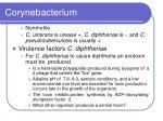 corynebacterium9