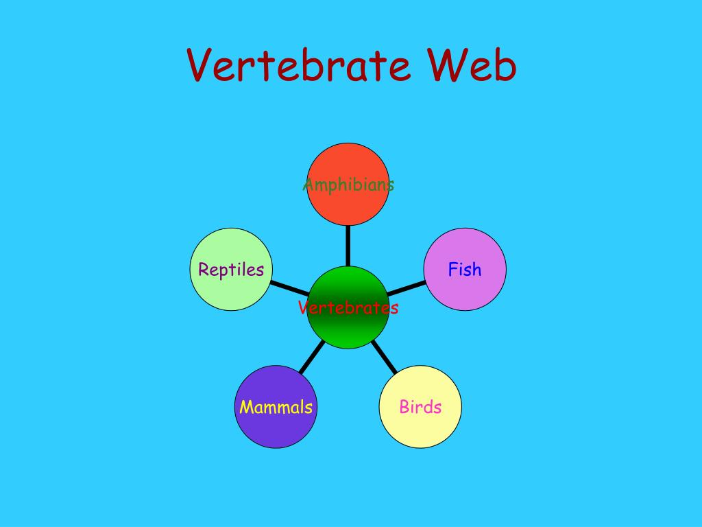 Vertebrate Web