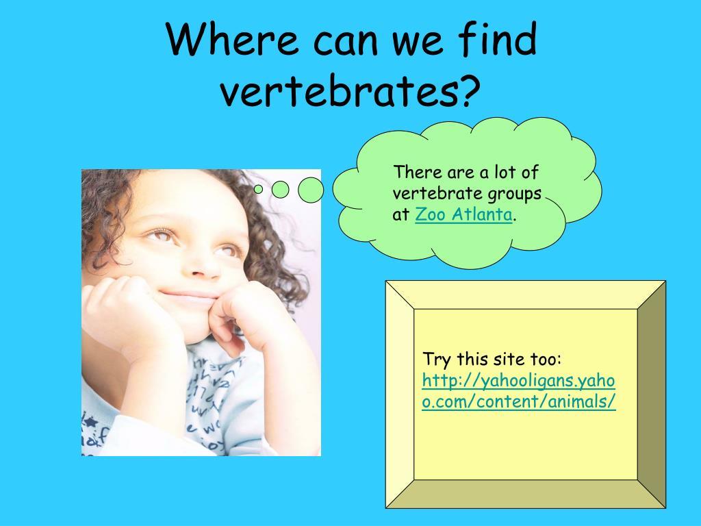 Where can we find vertebrates?