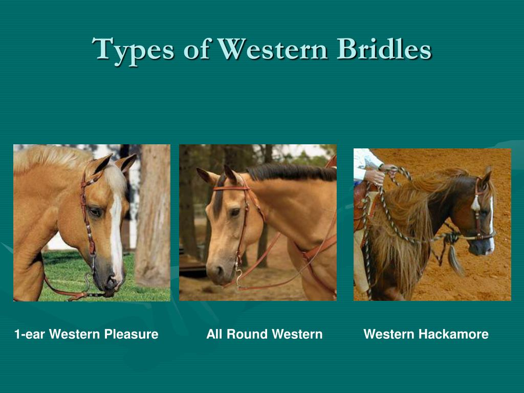 Types of Western Bridles