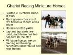 chariot racing miniature horses
