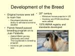 development of the breed