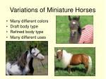 variations of miniature horses