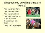what can you do with a miniature horse