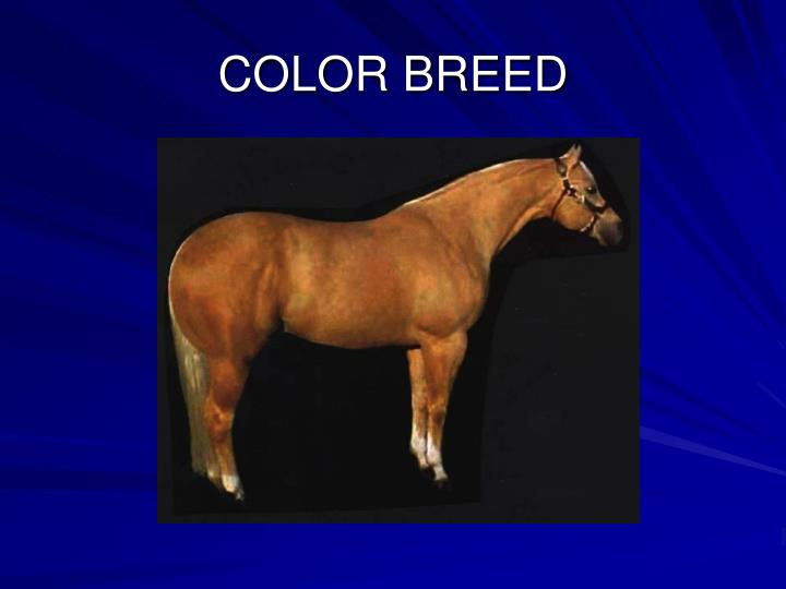COLOR BREED