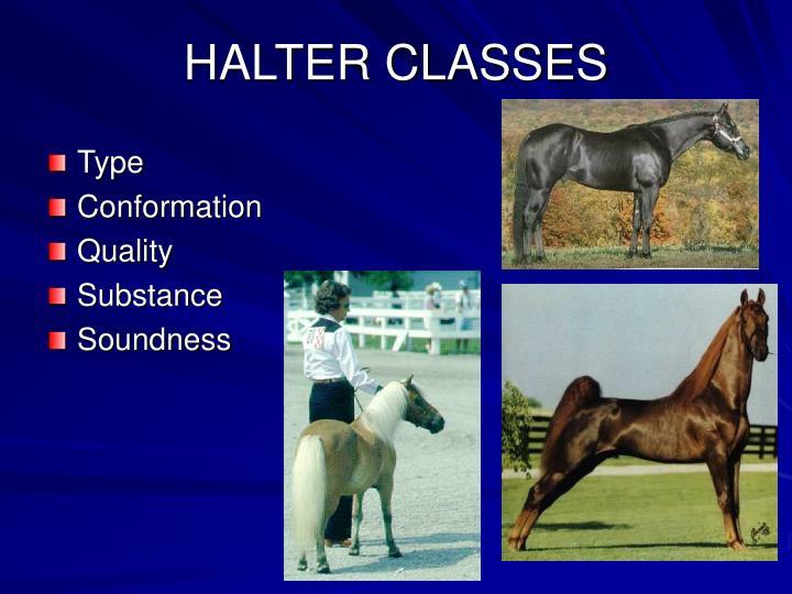 HALTER CLASSES