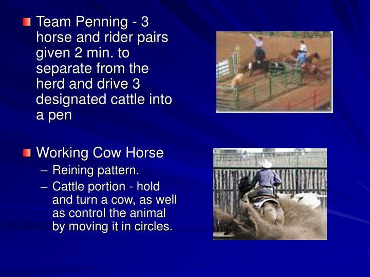Team Penning -