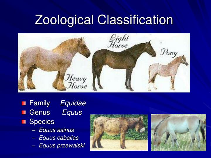 Zoological classification