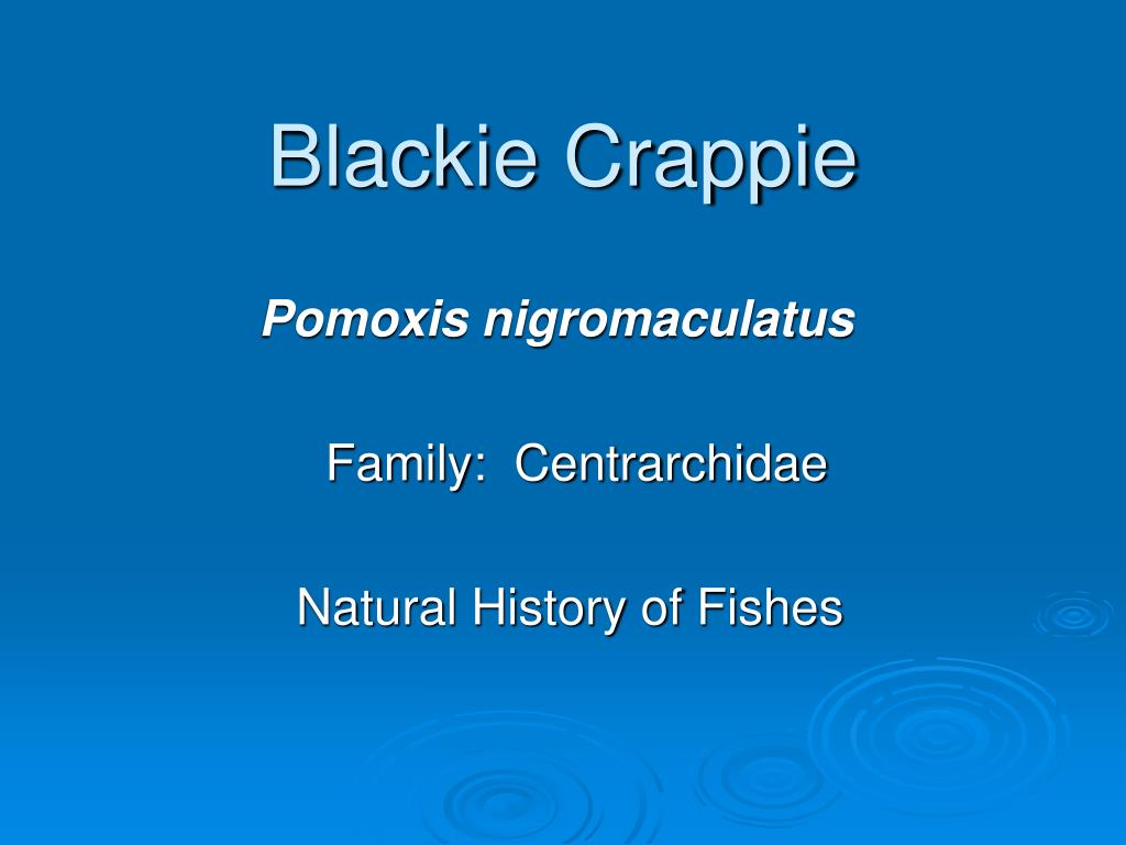 Blackie Crappie