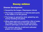 downy mildew2