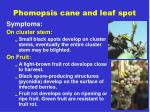 phomopsis cane and leaf spot1