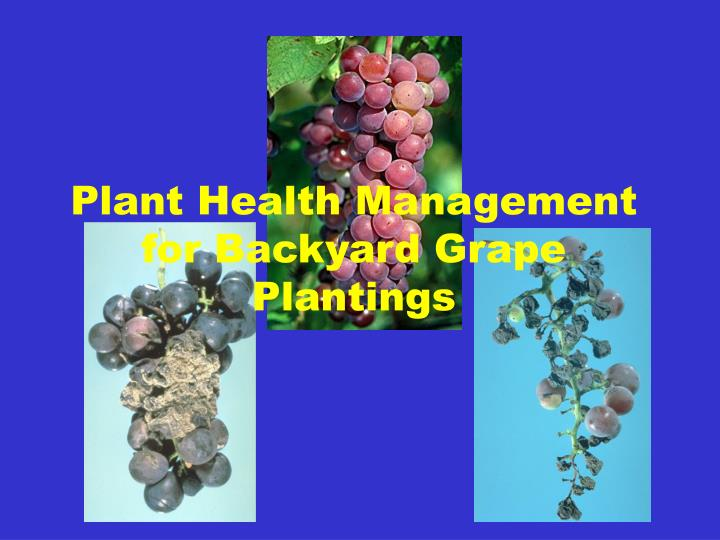 plant health management for backyard grape plantings n.