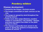 powdery mildew2