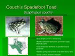 couch s spadefoot toad