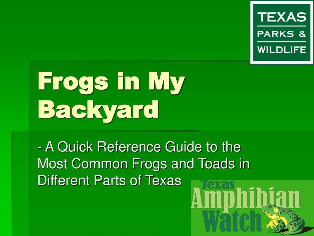 frogs in my backyard l.