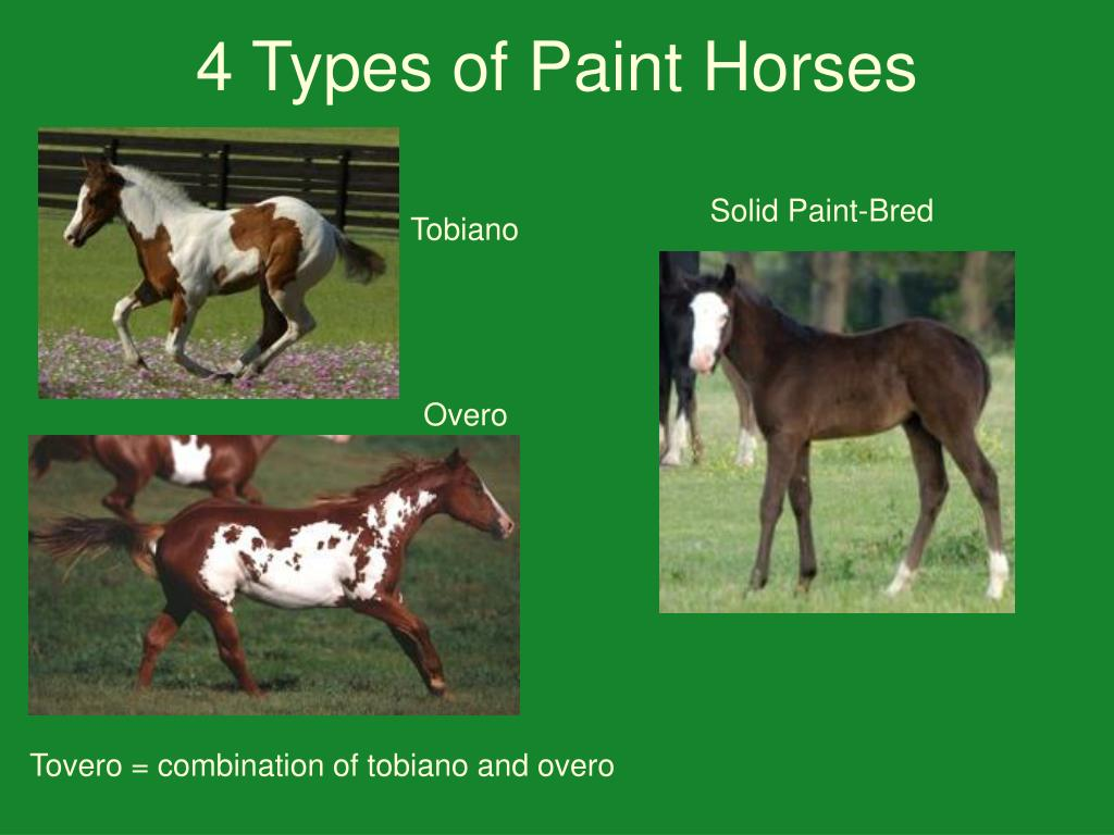 4 Types of Paint Horses
