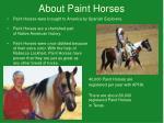 about paint horses