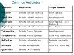 common antibiotics