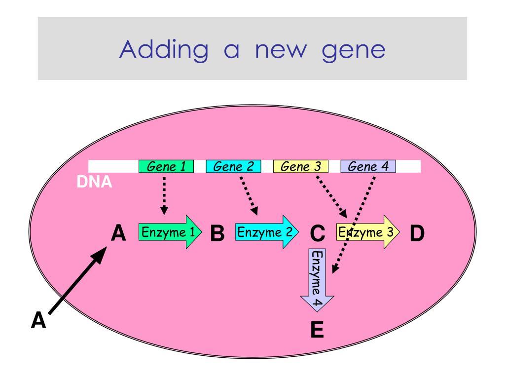 Adding  a  new  gene