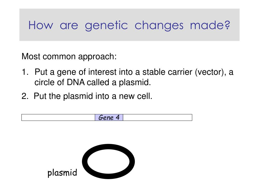 How  are  genetic  changes  made?