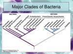 major clades of bacteria