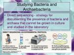 studying bacteria and archaebacteria14