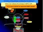 pheromone signaling pathway