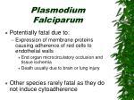 plasmodium falciparum79