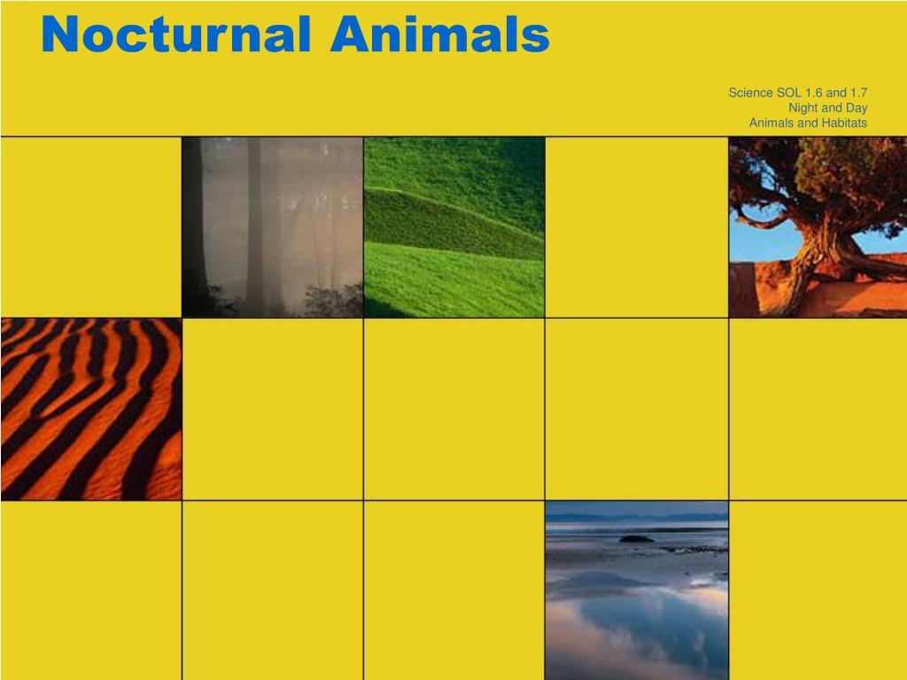nocturnal animals l.