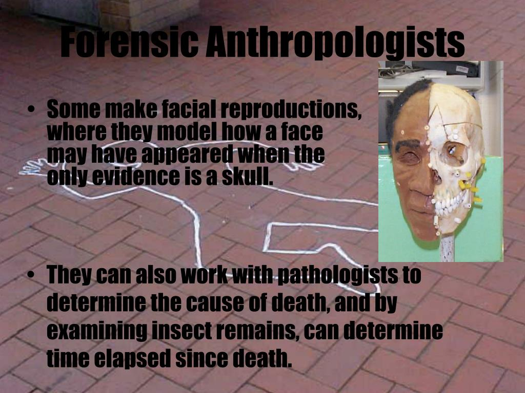 Forensic Anthropologists