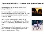 how often should a horse receive a dental exam