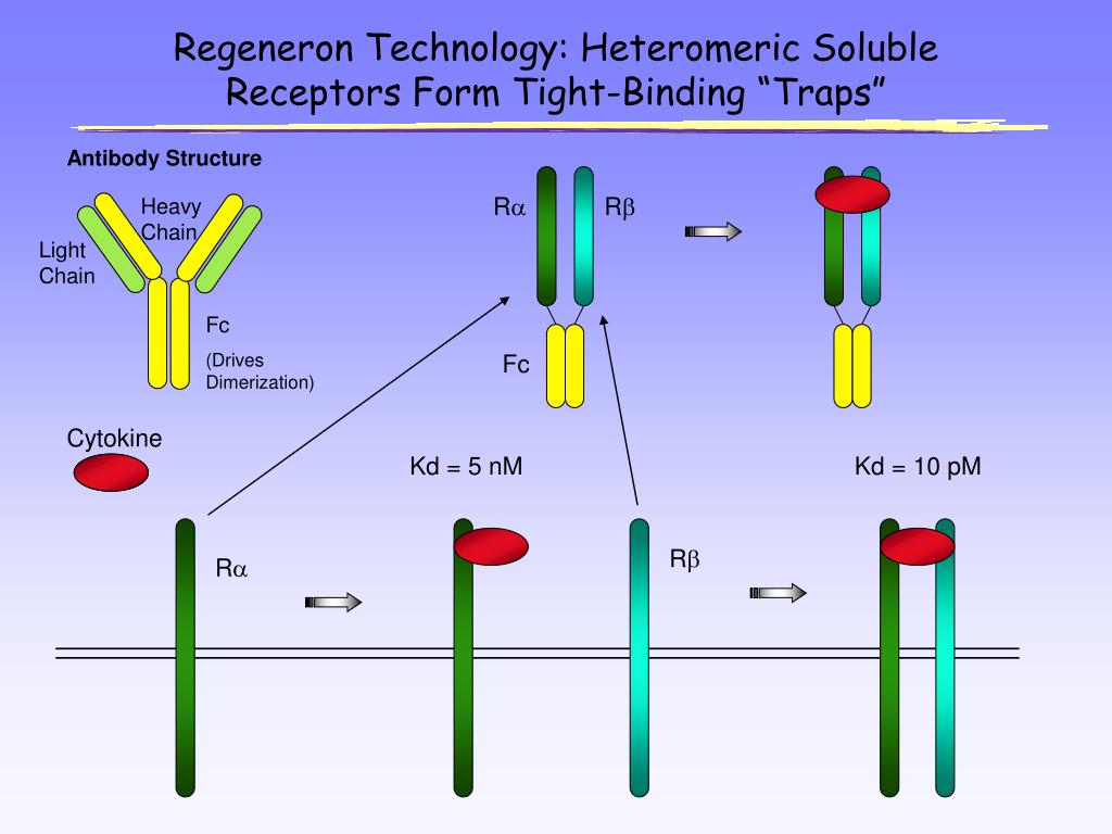 "Regeneron Technology: Heteromeric Soluble Receptors Form Tight-Binding ""Traps"""