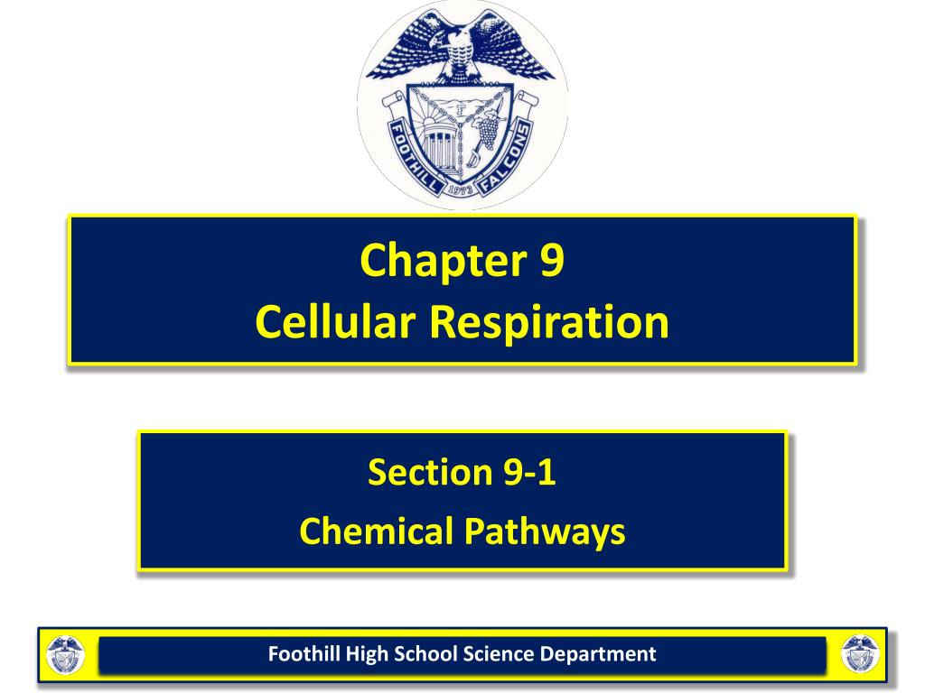 chapter 9 cellular respiration l.