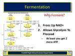 fermentation13