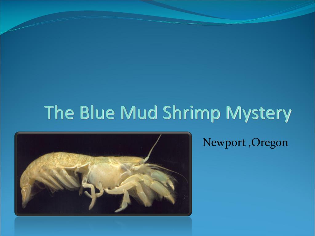 the blue mud shrimp mystery l.