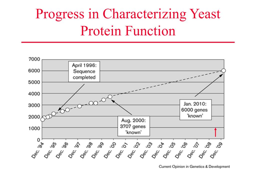 Progress in Characterizing Yeast Protein Function