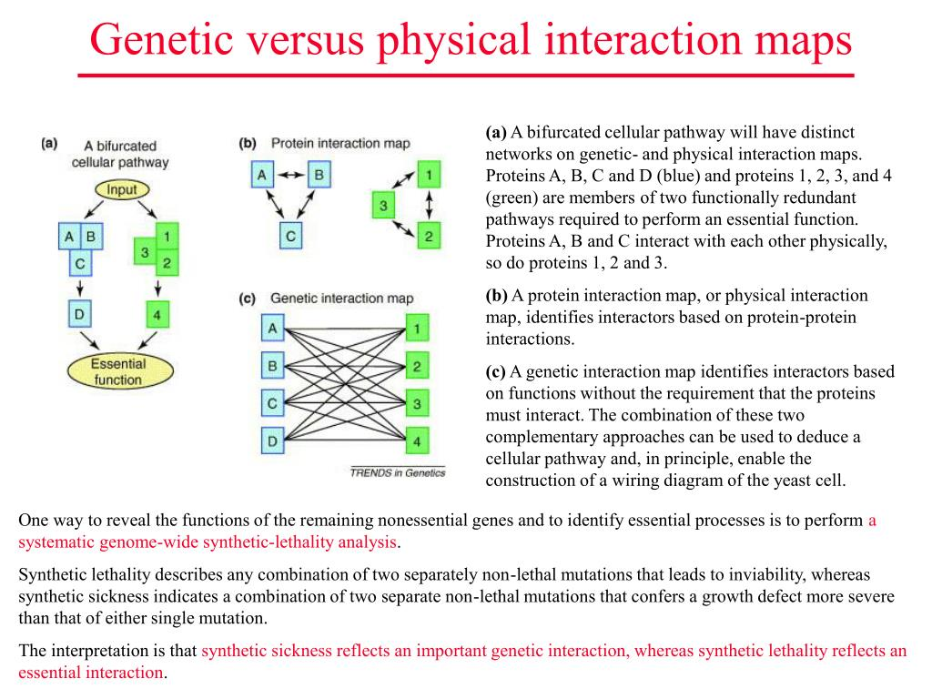 Genetic versus physical interaction maps