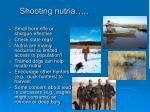 shooting nutria